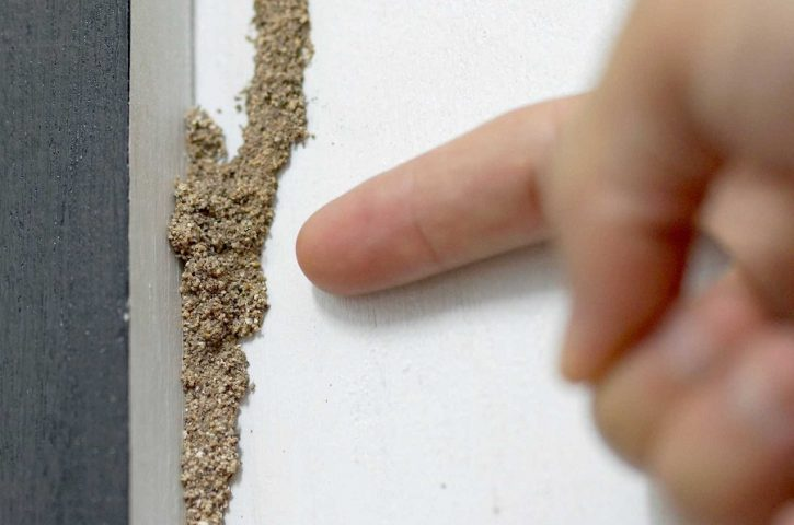 Need Help With Termite Control In Suffolk? Don't Miss These Pointers!